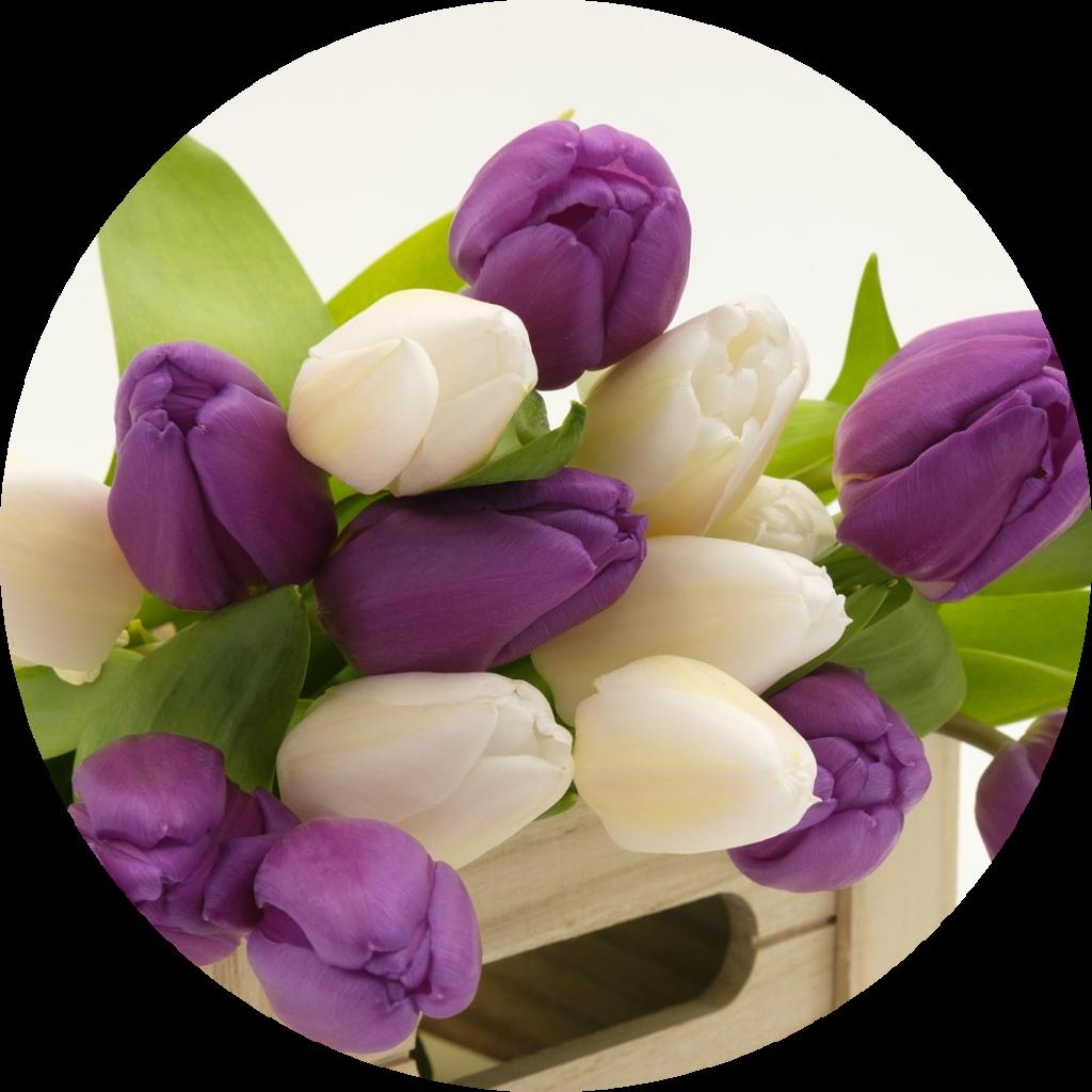 kwiaty i rośliny cięte