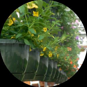 kwiaty rośliny doniczkowe